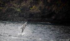 Pirouette des dauphins électre.