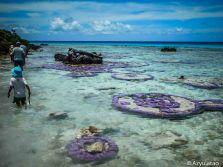 Coraux à fleur d'eau à Tikehau
