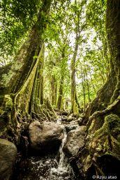 Forêt de légendes